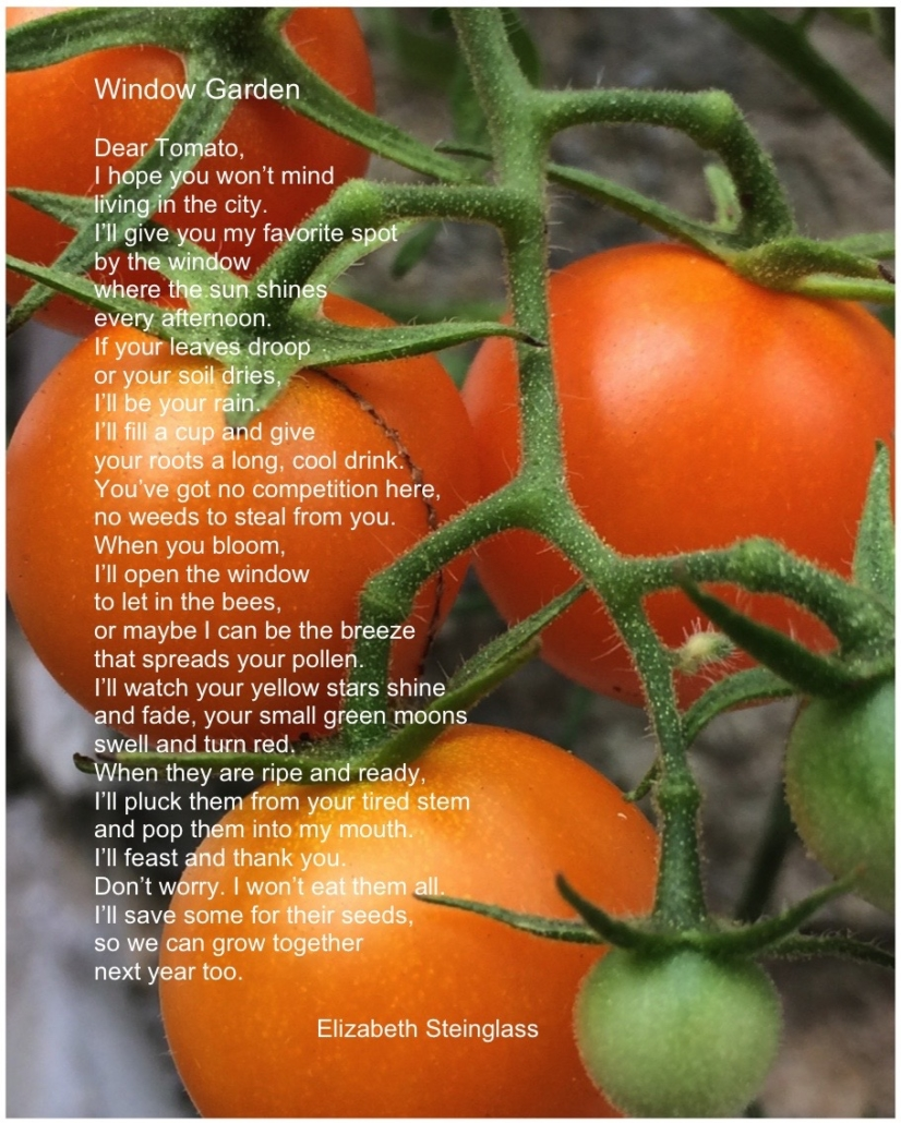 tomatoblog2